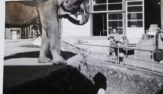 ラクテンチの象
